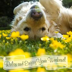 Relax and Enjoy Your Weekend! #weekend dog flowers happy