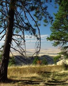 Oregon Trail through the Blue Mountains east of Pendleton Oregon-
