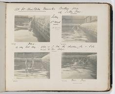 Tuesday - Photographs of the Allen family, 14 November 1899 - 4 November 1900