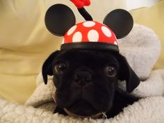 Fenway at 13 weeks with her Minnie Ears