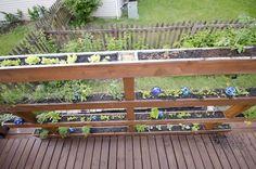 Privacy Screen AKA Veritcal Garden.  Love the space saving & utilitarian approach here!