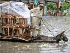 A man rides his donkey cart loaded with chairs through a flooded street, after a heavy downpour in Lahore August PHOTO:REUTERS Pakistan Funny, Pakistan Pictures, Too Close For Comfort, Rail Train, Nature View, The Donkey, Photojournalism, Dumb And Dumber, Cute Puppies
