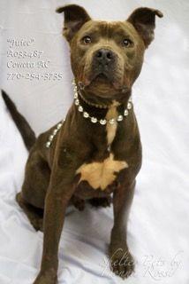 Urgent 2/1/2017 Dogs for adoption,euthanization,rescue,sponsor