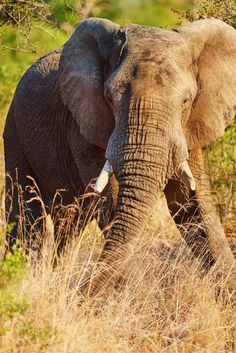 10 Top Guided Walking Safari Destinations | Many safari camps and lodges offer guided walking safari in the morning as an activity option.