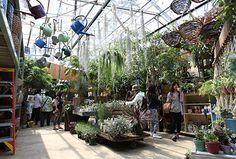 SHOP | SOLSO architectural plant  farm