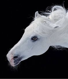 Most beautiful white horse  #white horse