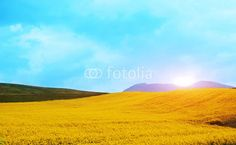 Mountain spring landscape with yellow flowers Spring Landscape, Yellow Flowers, Mountain, Nature, Travel, Naturaleza, Viajes, Traveling, Natural