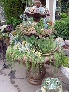 alternative use for water fountain! from Del Mar Fair Garden Exhibit...starting to fall in love with these succulent container gardens, thing I need one...or two?!