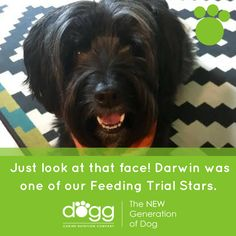 darwin-the-dog-plant-based-diet
