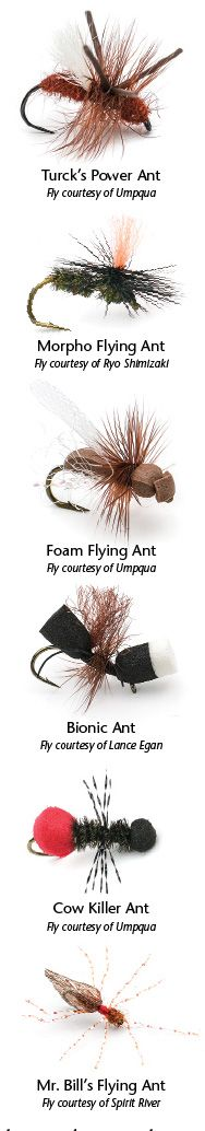 Formidable Formicidae | Northwest Fly Fishing