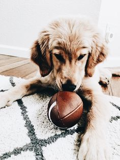 Some Helpful Ideas For Training Your Dog. Loving your dog does not mean you are willing to let him go hog wild on your possessions. That said, your dog doesn't feel the same way. Cute Puppies, Cute Dogs, Dogs And Puppies, Doggies, Animals And Pets, Baby Animals, Cute Animals, Savage, Labrador Retriever