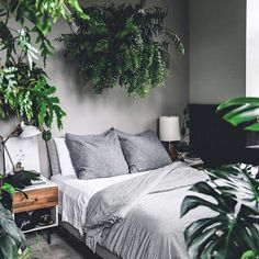 """- Siebeke Asselbergs (@planthoarder_) """"Bedroom goals unlocked by @hiltoncarter thanks for sharing your #imaplanthoarder """""""