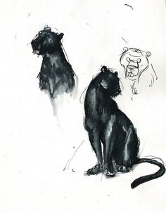 """Bagheera by winderly 