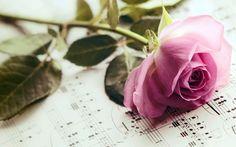 Piękna, Róża, Nuty