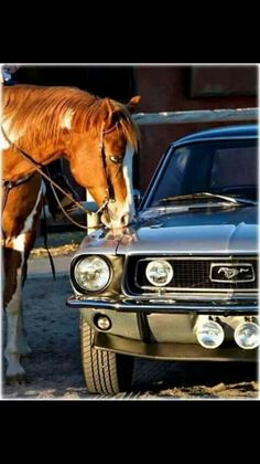 One day...a horse,this car....