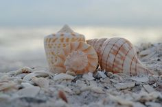 """""""The waves echo behind me. Patience ~ Faith ~ Openness ~ is what the sea has to teach. Simplicity ~ Solitude ~ Intermittency ~ ... But there are other beaches to explore. There are more shells to find.  This is only a beginning."""" ~Ann Morrow Lindbergh"""