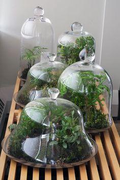 moss and ferns under glass