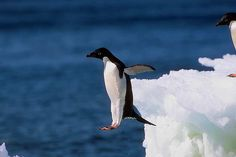 jumper pinguin | Flickr - Photo Sharing!