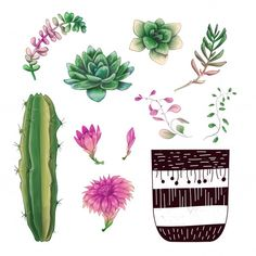 Illustration about Potted cacti and succulents plants badge collection set. Illustration of botanical, mexican, background - 134233603 Succulents Drawing, Cacti And Succulents, Planting Succulents, Cactus Planta, Cactus Y Suculentas, Badge, Decoupage, Single Image, Vector Design