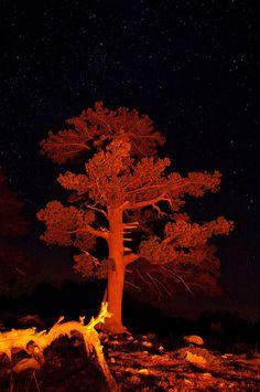 Il Giardino degli Dei ( Monte Pollino) ripreso di notte