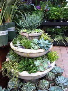 416 Best Succulent Dish Gardens Images Succulents Indoor House