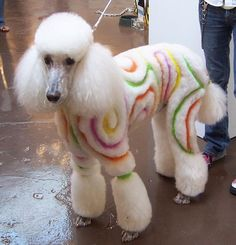 -repinned- Pretty creative dog grooming #doggroomingbusiness