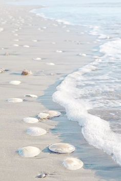 Sanddollar-Paradies, You are in the right place about Beach Vacation with kids Here we offer you the most beautiful pictures about the Beach Vacation hacks you are looking for. Beach Bum, Ocean Beach, Summer Beach, Summer Blues, I Love The Beach, Beach Aesthetic, Sea And Ocean, Beach Cottages, Beach Houses