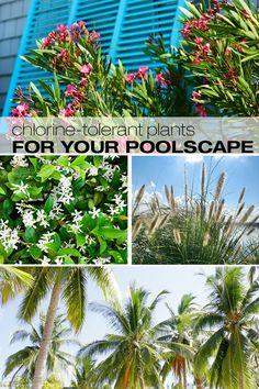 The Best Chlorine-Tolerant Plants