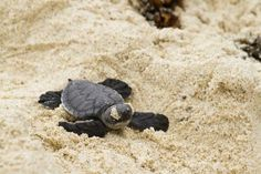 WildAid Protects Endangered Sea Turtles in Ecuador. WildAid | News