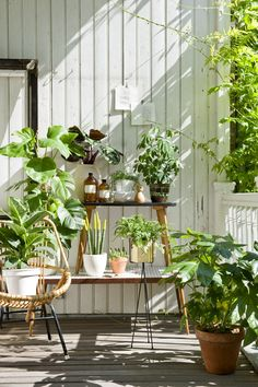 Mit Pflanzen den Sommer feiern Summery flair on the veranda Garden Deco, Balcony Garden, Indoor Garden, Indoor Plants, Outdoor Gardens, Porch Plants, Balcony Plants, Porch Garden, Summer Plants