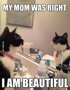 Katten memes