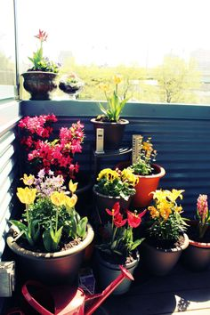 personal cozy garden... little can go a long way... in everything.