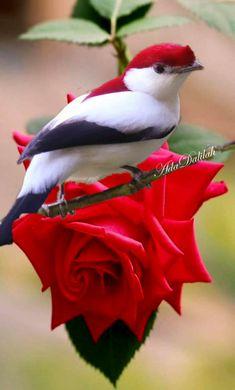 Beautiful Rose Flowers, Most Beautiful Birds, Pretty Birds, Rare Birds, Exotic Birds, Colorful Birds, Beautiful Creatures, Animals Beautiful, Animals And Pets