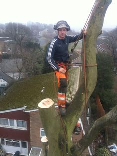 Lyndwood Forestry {Arboriculture, Forestry and Fencing} Lyndwood Forestry is a family run company. We believe that good communication, hard work and customer satisfaction are the key to repeat business. Good Communication, Web Design, Album, Design Web, Website Designs, Site Design