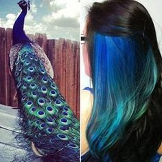 peacock hair color-not my color, but cool idea. Maybe once my hair grows out again Peacock Hair Color, Bold Hair Color, Bright Hair, Hair Colors, Peacock Colors, Peacock Blue, Oil Slick Hair Color, Teal, Peacock Theme