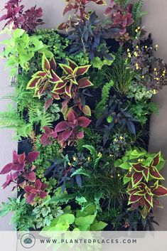 Vertical Gardens Get creative and DIY a Leafy Living Wall for your home! Our DIY Garden Kits are perfect for customizing your backyard with a vertical garden using custom planters and beautiful plants just for you. Leafy Plants, Indoor Plants, Wall Of Plants, Hanging Plants On Fence, Vertical Plant Wall, Pot Plants, House Plants, Jardin Vertical Artificial, Vertikal Garden