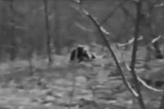 Sightings of The Dogman have been reported in Michigan since 1987. 10 years later, a witness camping in the forest near Luther heard a chilling howl, something more human-like than a wolf or coyote. That night, he saw a creature across a narrow river bed from him, standing larger than a bear, with black fur, a long skull, & reflective yellow eyes. The beast howled again, then ran up the bank and disappeared. Most startling of all, the creature ran not on all fours, but on two legs, like a…