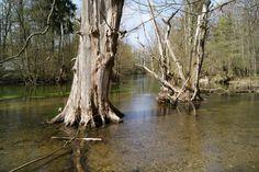 تا ریشه در آب است  امید ثمر است