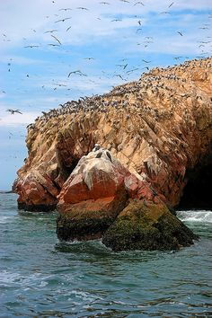 "Islas Ballestas, considered to be the ""Peruvian Galápagos"""