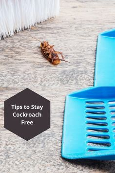 No wonder that cockroaches as pests are both horrible and nuisance. Spotting a cockroach crawling around washrooms or cuisines marks the beginning of your irritation, especially when their numbers are high. Cockroach Control, Pest Control Services, Numbers, Beach, Tips, Free, The Beach, Beaches, Counseling