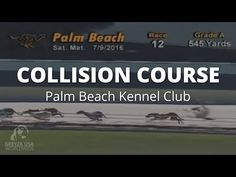 Twenty-five greyhounds have died at the Palm Beach Kennel Club in Florida since 2013. The fate of many more dogs is unknown. In the summer of 2016 we documented dozens of violent collisions at this track. We are closer than ever to ending dog racing in Florida but we still need your help. Please share this video widely and encourage your friends to sign this petition. You can also donate to help end dog racing in Florida here: http://grey2kusa.org/FloridaRacing/ Thank you