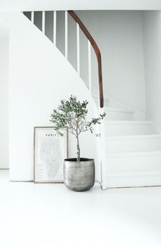Like the idea of having potted olive trees in the store, but in white or wood pots...