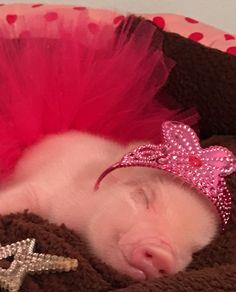 Princess Pig!