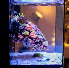 Coral Reef Aquarium, Saltwater Aquarium Fish, Saltwater Tank, Marine Aquarium, Nano Reef Tank, Reef Tanks, Cheap Fish Tanks, Reef Aquascaping, Nano Cube