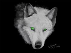 Silver Wolf with Green Eyes | The Silver Wolf by WindSeeker