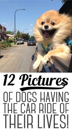 12 pictures of dogs livin' it up
