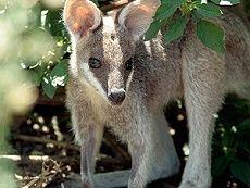 Scenic Rim Accommodation - Farmstay perfect for the family! Deer Farm, Brisbane Gold Coast, Nature Spirits, Farm Stay, Spirit Animal, Queensland Australia, Farming, Animals, Holiday