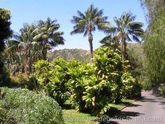Botanical Garden (Gran Canaria) / Jardín Botánico (Gran Canaria)