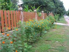 บล็อกของ Suthikarn   บ้านสวนพอเพียง