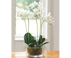 Fashions come and fads go - in flowers as in so much else. Phalaenopsis Orchid, Orchids, Artificial Flowers, Planting Flowers, Glass Vase, Bloom, Plants, Home Decor, Fake Flowers